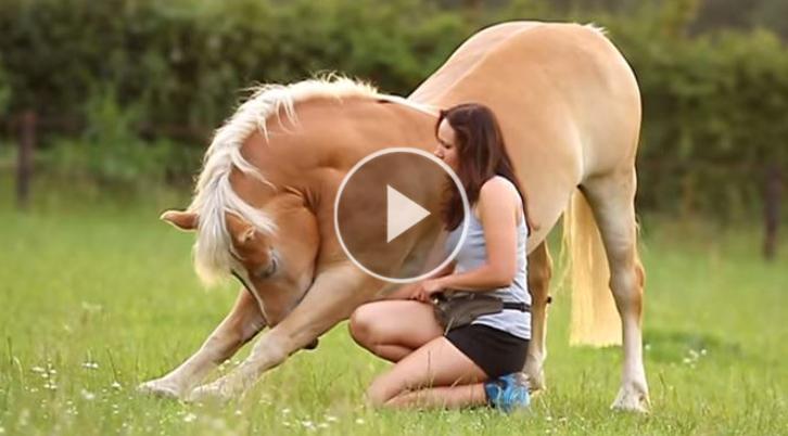 shilas cavalo