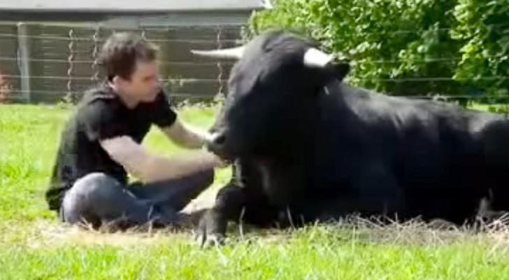 touro-bravo-e-homem