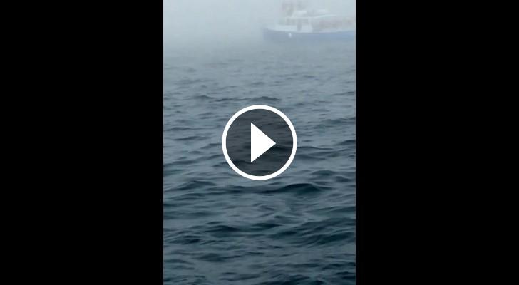 baleia salta