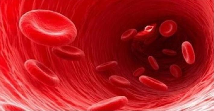 arterias_-_novo_-_oito_remedios