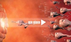 video-gravidez