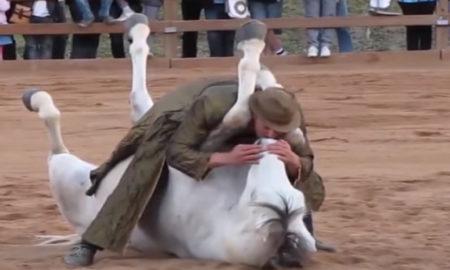 cavalo-1